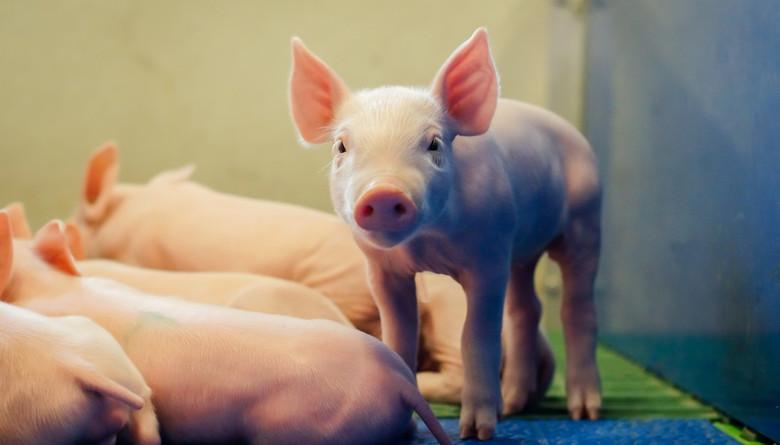 El precio del cerdo en EE.UU. continúa estando fuerte