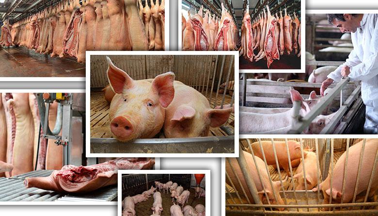 Carne de cerdo y el Tratado de Libre Comercio de América del Norte