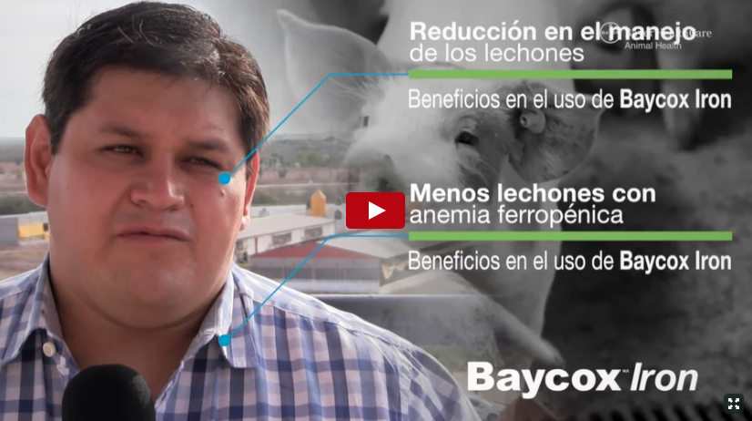 Testimonios Baycox Iron: MVZ. Gerardo Camacho Herrera, Coordinador de Producción Grupo Yoreme