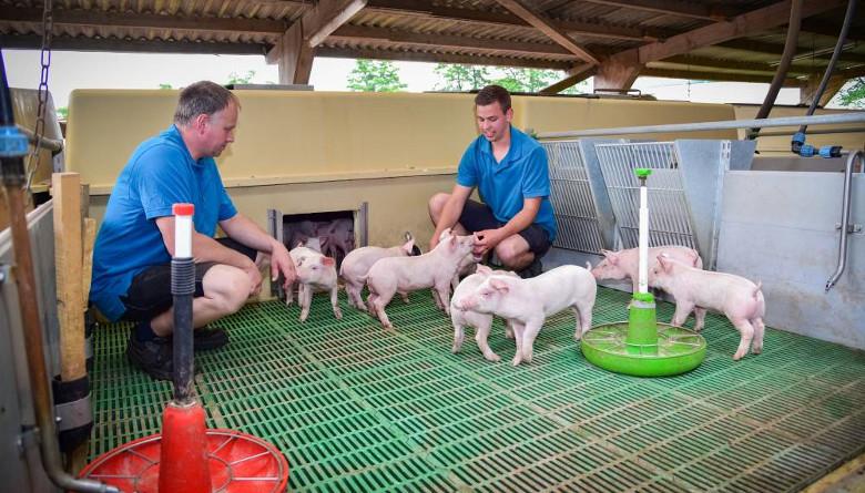 En porcicultura lo más importante, después del cerdo, es el personal
