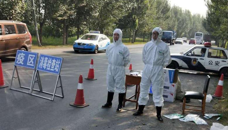 Asia en alerta por el primer brote de Peste Porcina Africana registrado en China