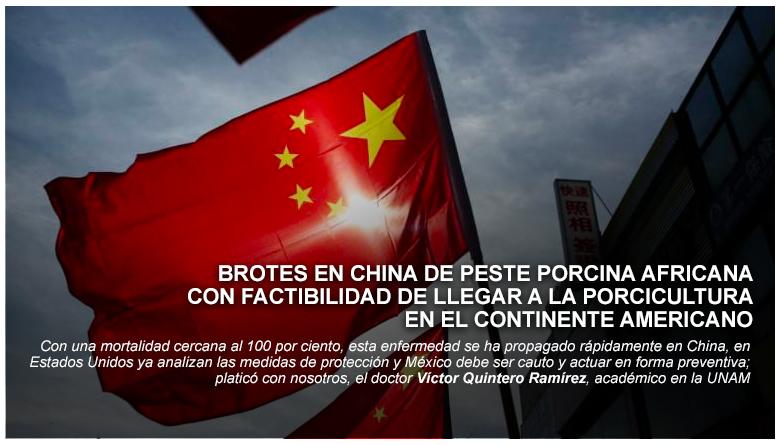 Crece el riesgo para América por brotes de Peste Porcina Africana en China