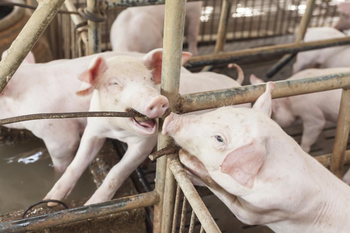 Bienestar animal: aspectos importantes