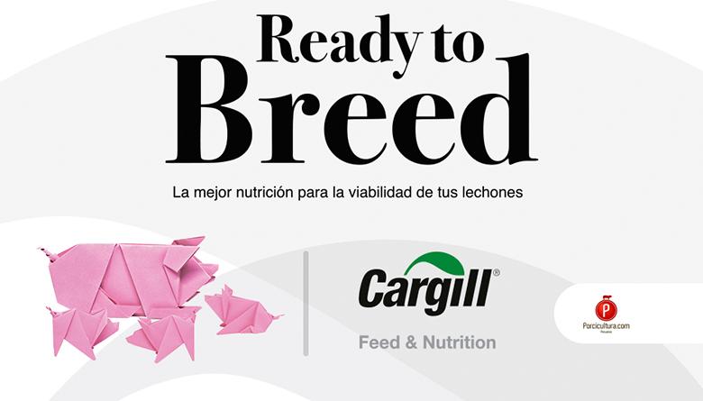 Cargill lanza al mercado Ready to Breed para la nutrición en las cerdas