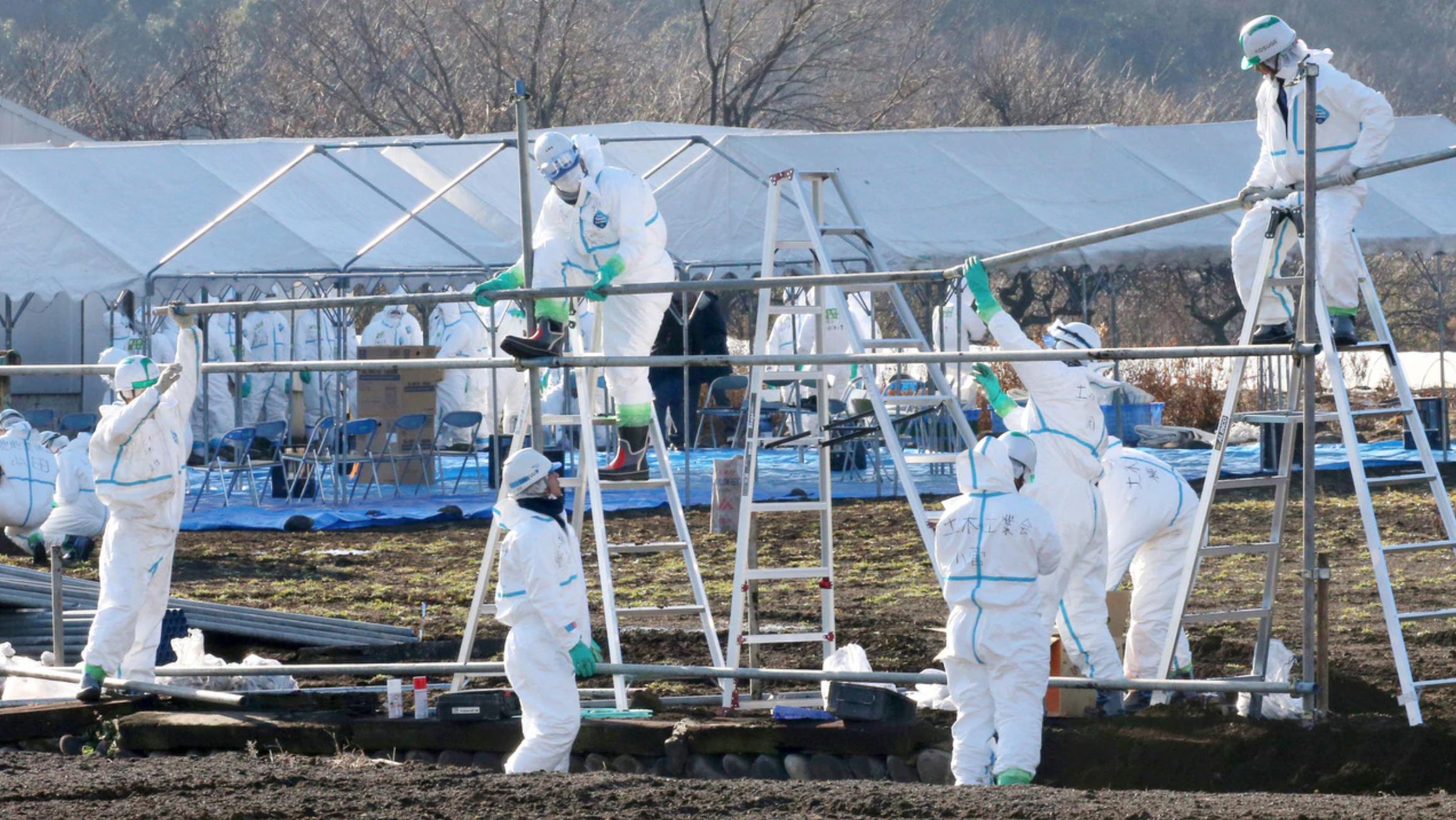 Japón anunció una nueva estrategia para enfrentar la situación de Peste Porcina Clásica