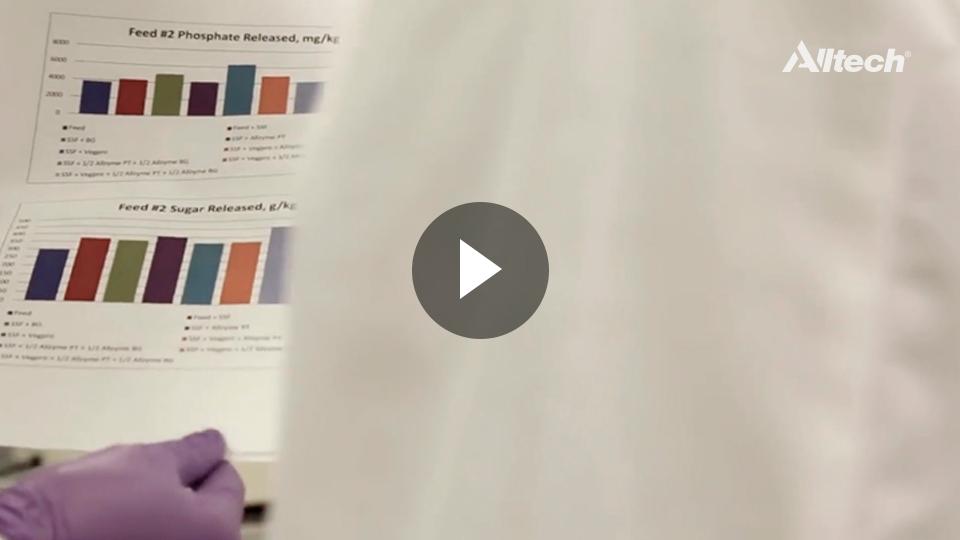 ¿Están las micotoxinas en su radar?
