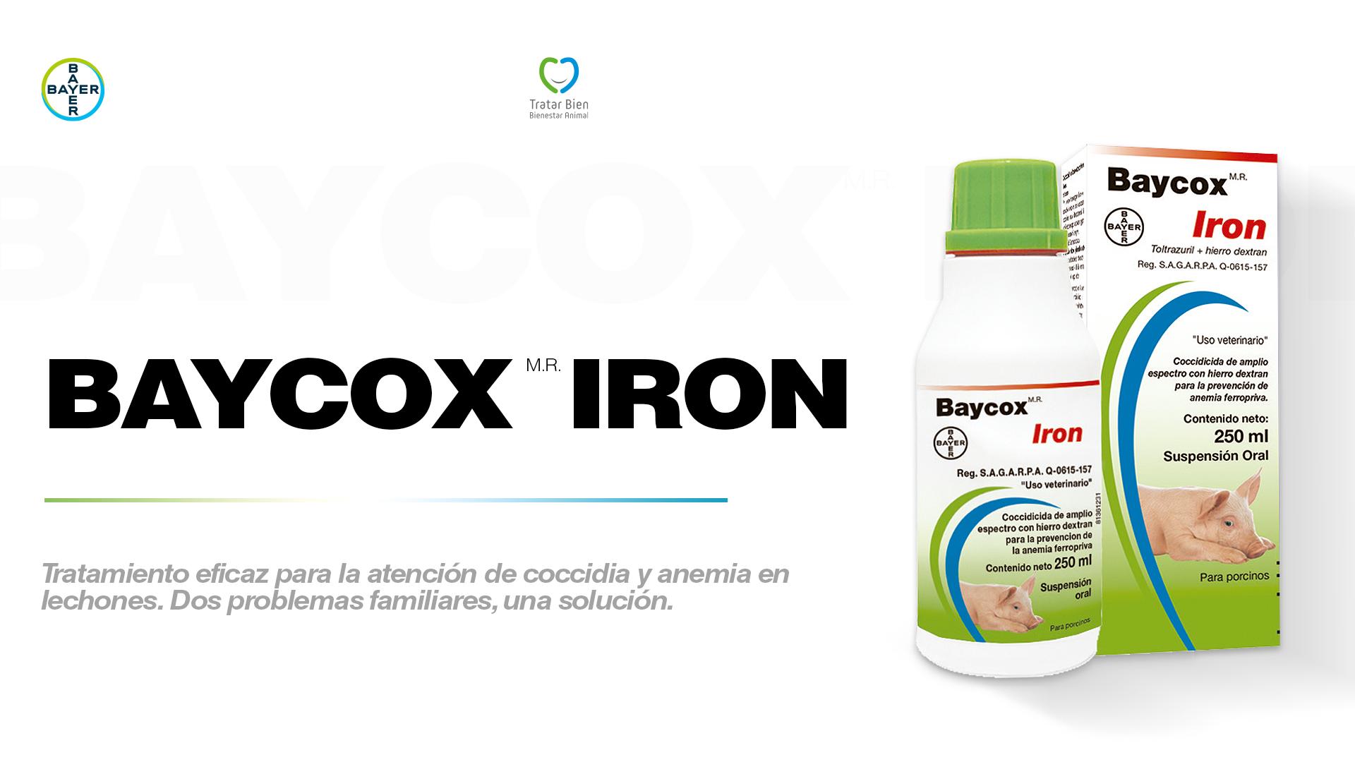 Baycox Iron: Tratamiento de coccidia y anemia en los lechones