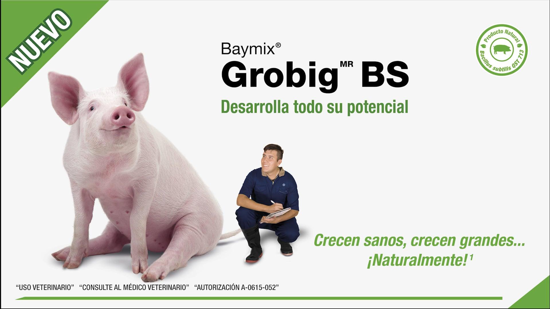 Baymix Grobig: Desarrolla todo su potencial