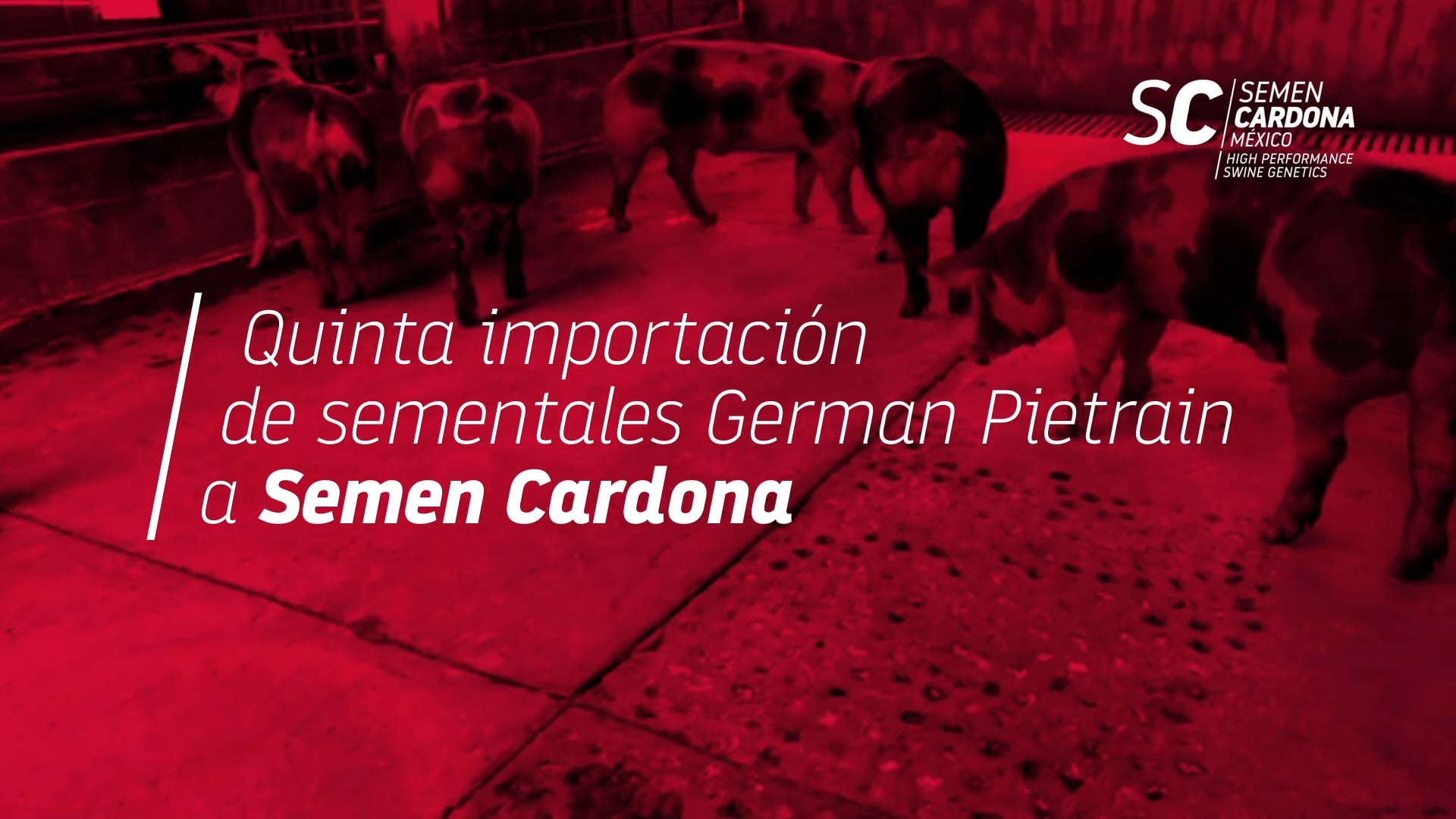 Experiencias de uso del controlador y software de gestión para granjas porcinas Maximus. Casos en Latinoamérica