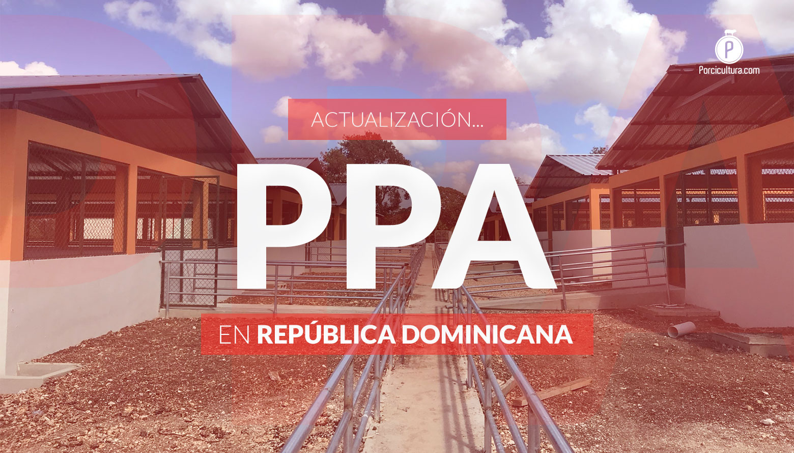 <p>Casi 20,000 cerdos de traspatio susceptibles a PPA en Dominicana; en México se encienden los focos de alerta</p>