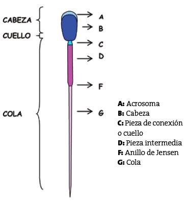 Procesamiento de las Dosis